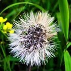 Make a wish and in one long breath ......blow all of the seeds into the air! by Elly Rousou