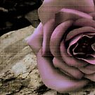 Antique Rose by Kylie Van Ingen