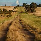 Farm Lane,Bellarine Peninsula by Joe Mortelliti