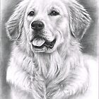 Golden Retriever Spence by Nicole Zeug