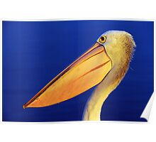 """ Last evening light Pelican ""   Marlo Australia Poster"