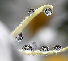 The flower fairy by Melinda Gaal
