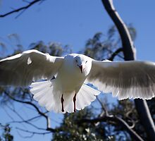 Footless Seagull by Sharon Robertson