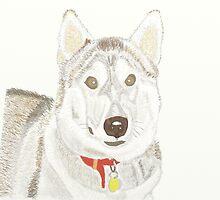 Husky by Lee-Watson