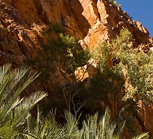 Ormiston Gorge Cycads by kateabell