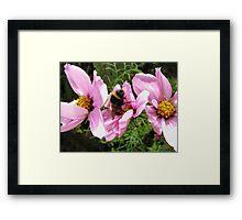 Bee Feast Framed Print