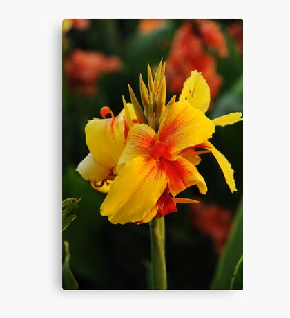 Colourful Canvas Print
