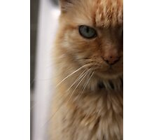 up close and feline Photographic Print