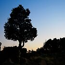The Man and the Tree by TaniaLosada
