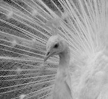 Peacock head by eefy
