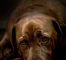 Whatever wags ya tail..... by Sue Wilson (Kane)