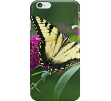 Tiger Swallowtail Butterfly - Papilio glaucus iPhone Case/Skin