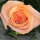 Single Rose by vbk70