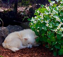 Lazy Afternoon by David Chappell