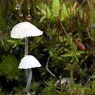 Mushrooms and Moss by muzwilson