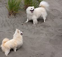 Eskies in the Sand by David Chappell