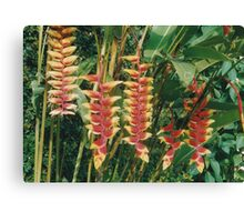 Tropical red yellow flowers with green leafs Canvas Print