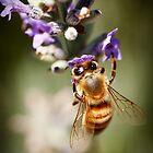 Bee on Lavender by psnoonan