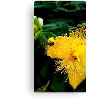 Sunshine Yellow, Bee Black & Orange Canvas Print