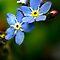 14th of September - Blue Flower