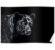 Portrait Of A Bear Fine Art Print Poster