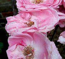 Rose Pink in Nature's Delight by Vanessa  Warren