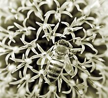 Bee by maxblack