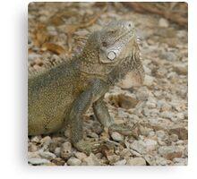 Iguana Bonaire Metal Print