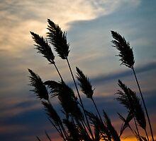 Magothy Sunset by LeeAnne Emrick
