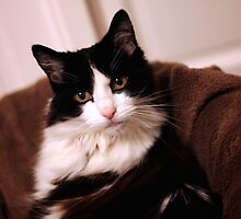 Black and White Cat by ejrphotography