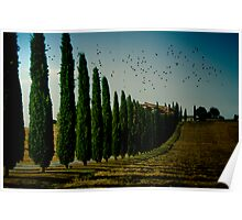 Cypress and Birds Poster