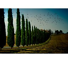 Cypress and Birds Photographic Print