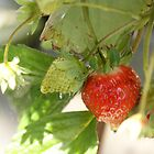 strawberry by Dirk van Laar