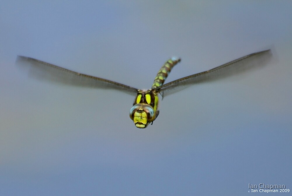 Flight Of The Dragonfly by Ian Chapman