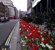 Red Tulip City Perspective by Vanessa  Warren