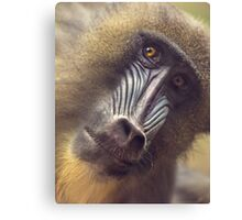 Mandrill staring contest Canvas Print