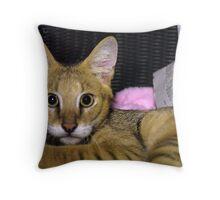 Startled Throw Pillow