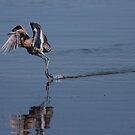 walking on water  by kathy s gillentine