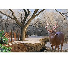 1263-Broken Fence in Winter Photographic Print