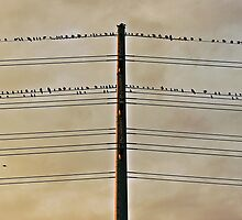 Birds on Wire by dangrieb