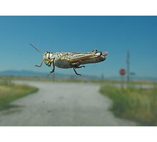 Misguided Grasshopper Photographic Print