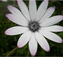 Swirls of pretty-ness by Dana Kay