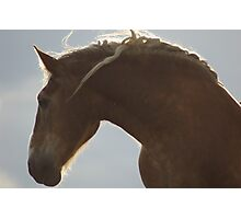 Moonshadow's Mane Photographic Print