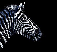 Zebra Portrait Fine Art Print by stockfineart