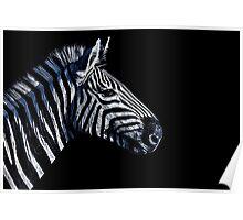 Zebra Portrait Fine Art Print Poster