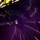 spiders web by Gareth Stamp