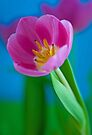 Painted Tulip by Renee Hubbard Fine Art Photography