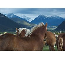 Manes & Mountains Photographic Print