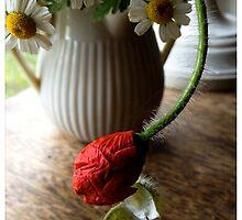 Poppy And Feverfew by Barbara Wyeth