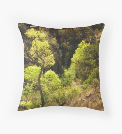 Springtime Cottonwood Throw Pillow